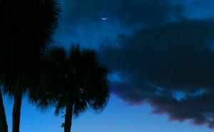 Palm tree dusk_omphoto
